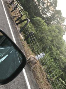 レークラインにお猿さん