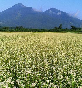 磐梯山蕎麦畑
