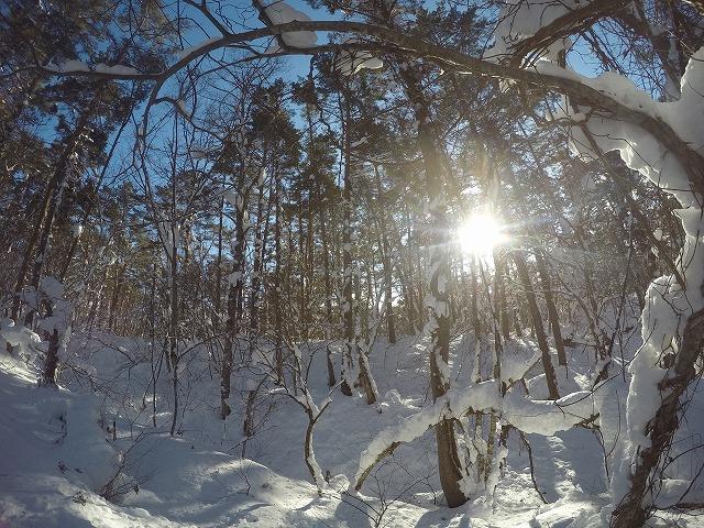 冬の五色沼の森
