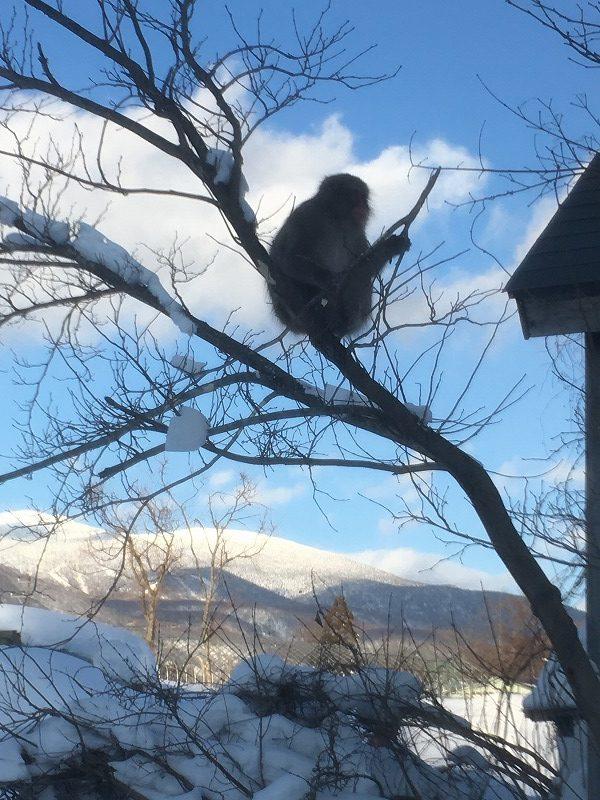木の皮を食べるニホンザル