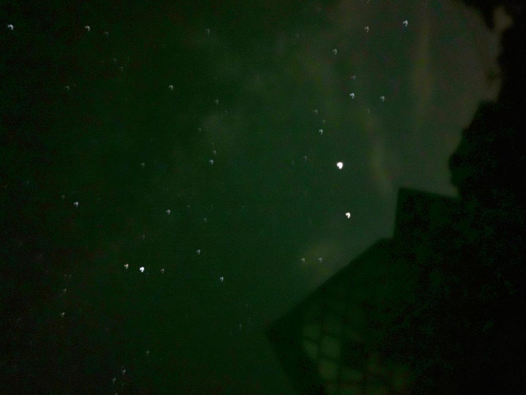 木星と土星の観測会