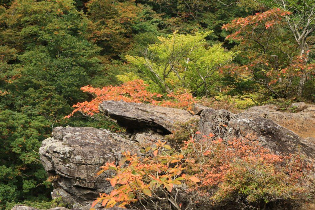 安達太良屏風岩紅葉