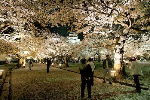 鶴ヶ城夜桜ライトアップ