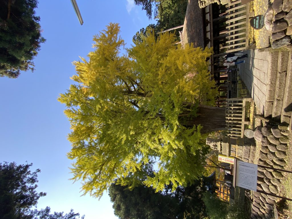 2020喜多方新熊野神社の紅葉