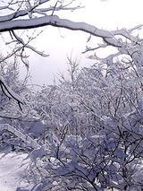 040105雪景色.jpg