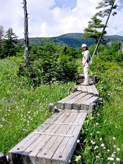 デコ平湿原の木道