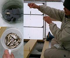 小野川湖でワカサギ釣りをしています