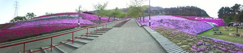ジュピランドひらた 芝桜」