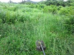 カレワラの除草
