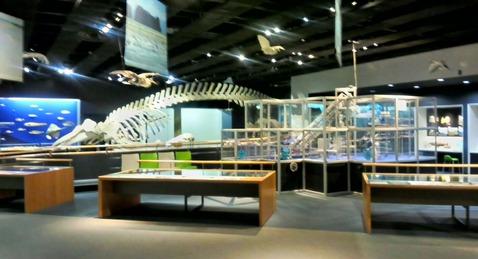 富山市立科学博物館の化石の展示