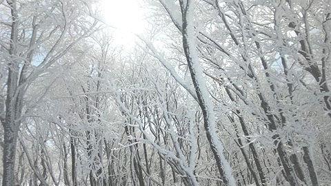 猫魔スキー場の霧氷
