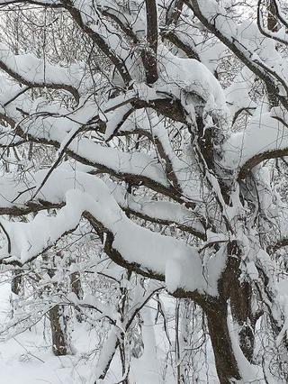 裏磐梯大雪警報