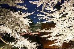 鶴ヶ城桜ライトアップ090419_2