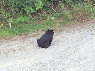 ペンションカレワラに熊出没2