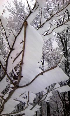 猫魔スキー場霧氷2