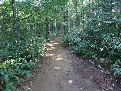 ブナ林を歩きます