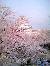 鶴ヶ城桜090419_1