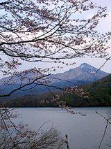 050509桜と磐梯山.jpg