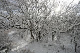 静寂した森