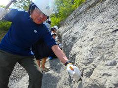 アンモナイトセンターで化石を発掘しています