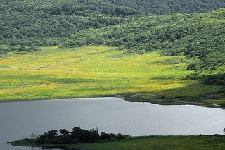 雄国沼の湿原 ニッコウキスゲ