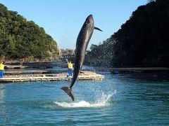 クジラのジャンプ!