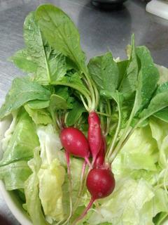五色沼ガーデンファーム シンプルすぎるラディッシュサラダ