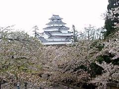 会津若松鶴が城の桜110502