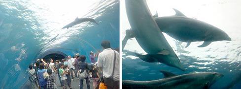 イルカのドーム