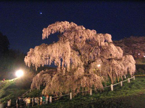 滝桜と金星(福島県三春町)
