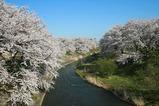 滝桜4月25日