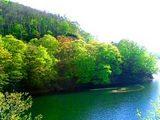 裏磐梯小野川湖の新緑