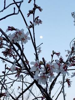 裏磐梯の春